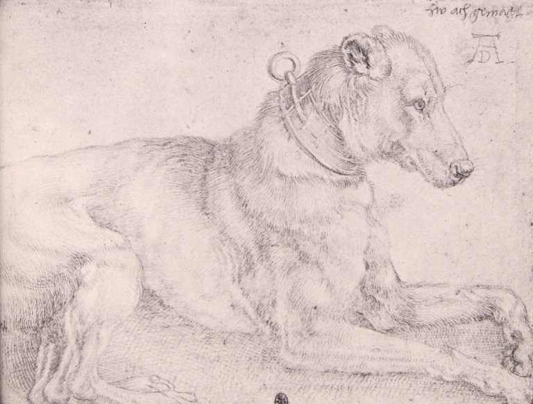 A Dog Resting