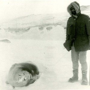 Donald Finkel in Antarctica with seal, January 1970