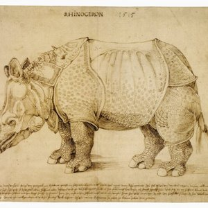 The Rhinoceros (drawing)